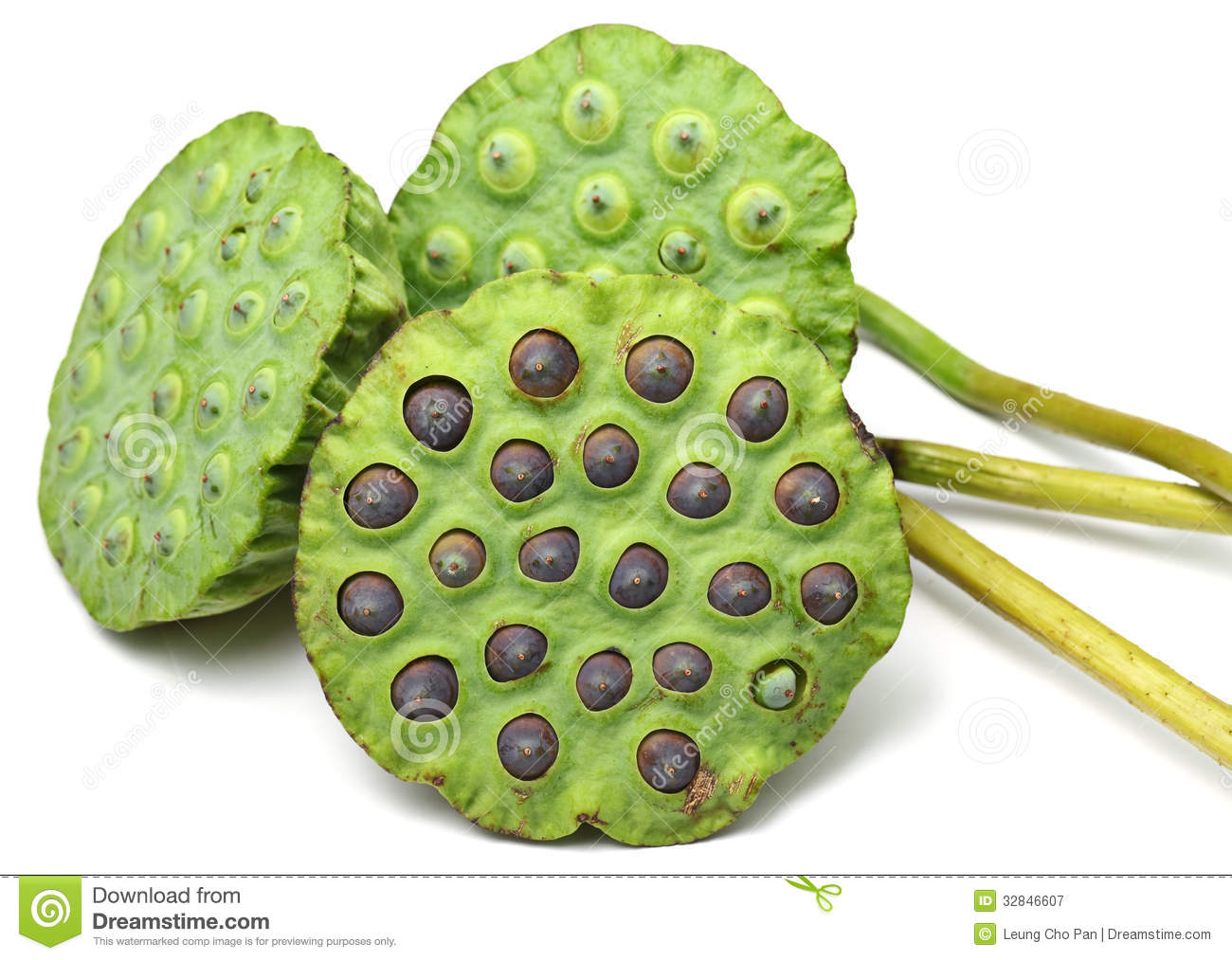 Lotus Seed Pod Royalty Free Stock Image.