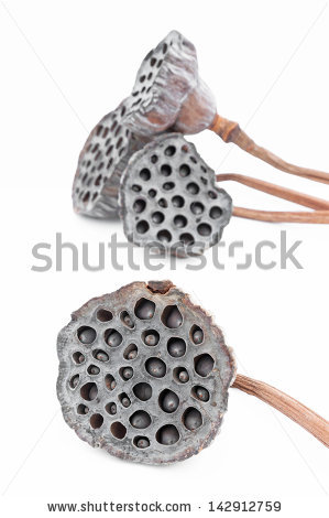 Seed Pods Stock Photos, Royalty.