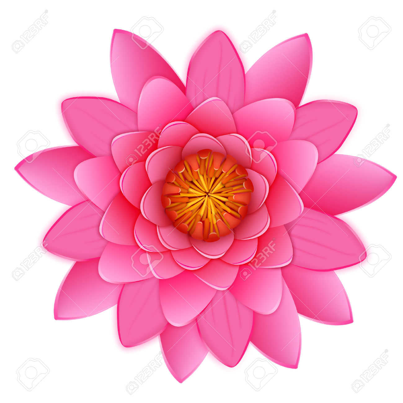 Beautiful Pink Lotus Or Waterlily Flower Isolated On White.