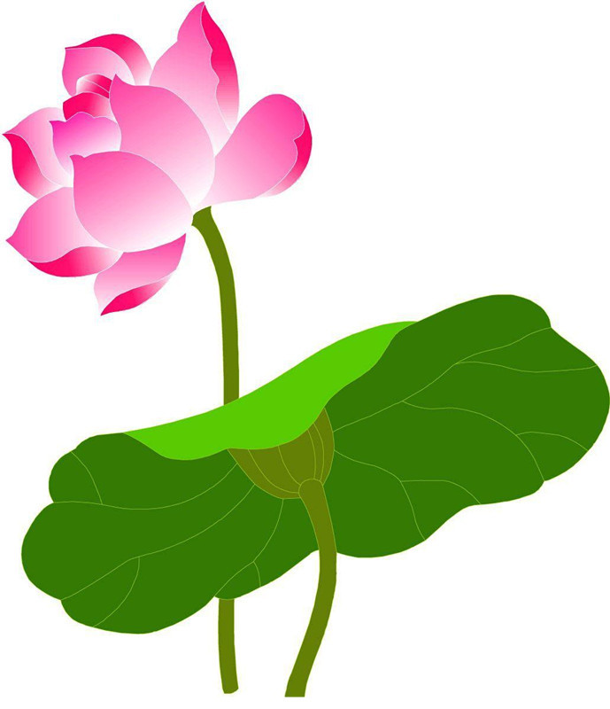lotus water lily flower clipart #11