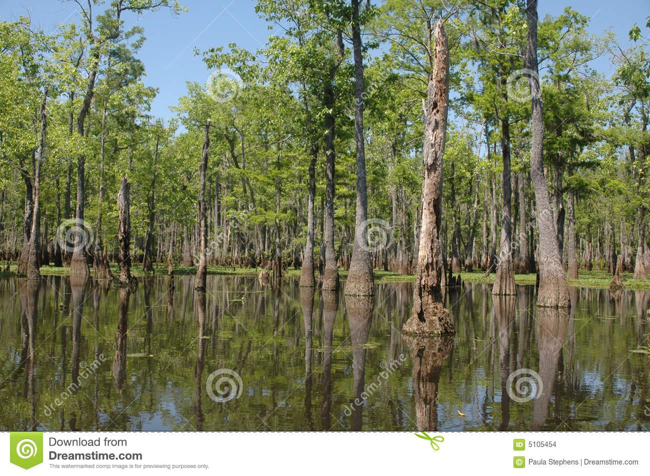 Louisiana Bayou Stock Images.
