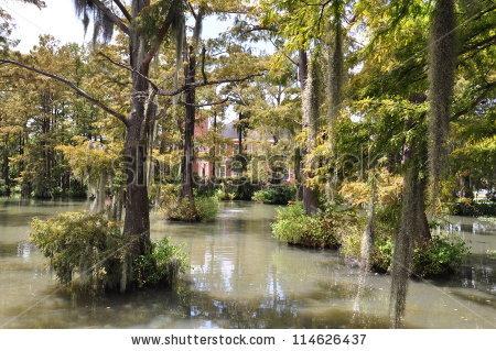 Louisiana Bayou Stock Photos, Royalty.