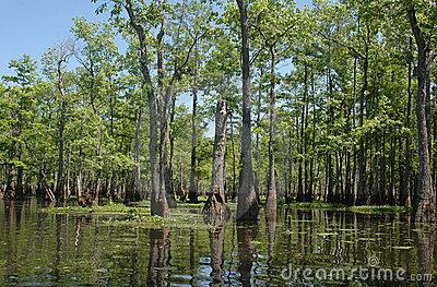 Louisiana Bayou Stock Photo.