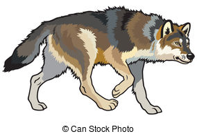 Wolf Illustrations and Clipart. 10,795 Wolf royalty free.