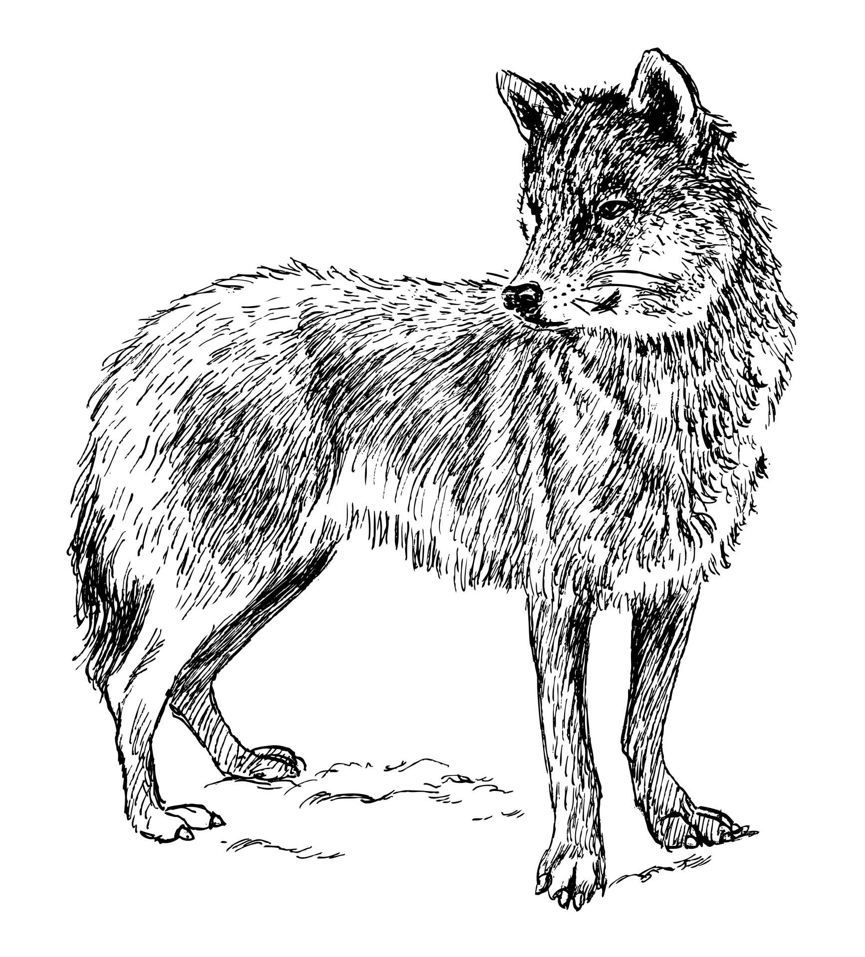 Loup Clipart Illustration Photo stock libre.