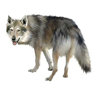 Clip Art Loup Related Keywords & Suggestions.