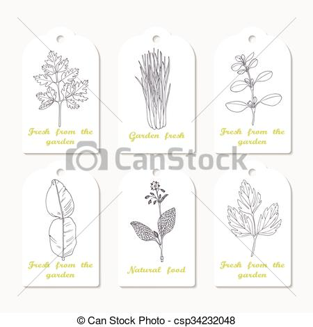 EPS Vector of Tags collection with hand drawn spicy herbs.