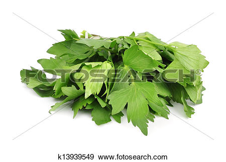 Stock Photograph of Lovage k13939549.