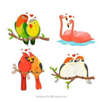 Lovebird Vectors, Photos and PSD files.
