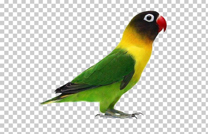 Parrot Yellow.