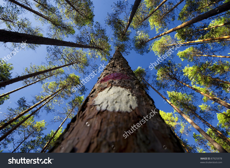 Low Angle Shot Trees Stock Photo 87925978.