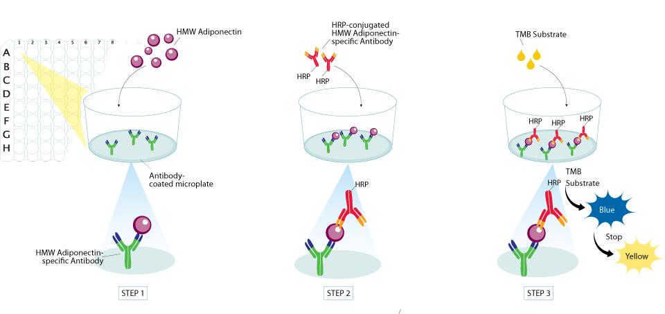 ELISA For The Measurement of High Molecular Weight Adiponectin.