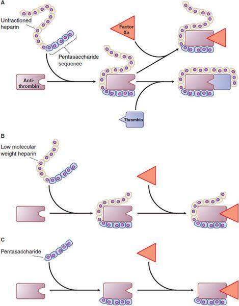 Blood Coagulation and Anticoagulant, Fibrinolytic, and.
