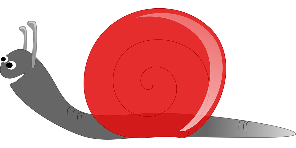 Free vector graphic: Snail, Slow, Low Speed, Snail Shell.