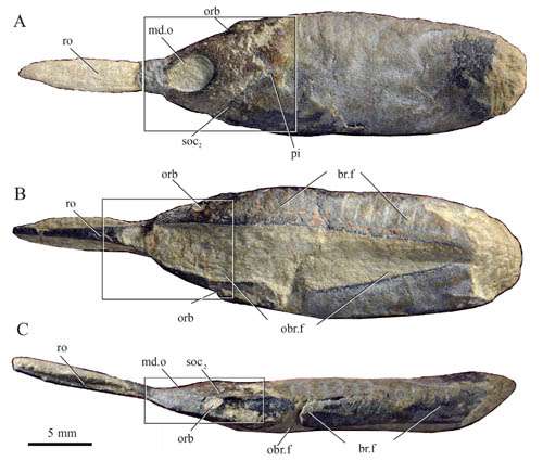 jawless fish found from the Lower Devonian of Yunnan, China.