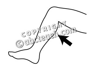 Lower leg clipart - Clipground