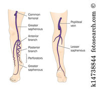 Lower leg Clipart Illustrations. 209 lower leg clip art vector EPS.