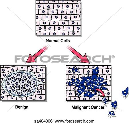 Stock Illustration of Illustration of tissues at the histological.