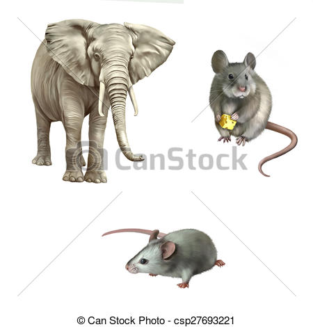 Clip Art of mouse, African elephant, Loxodonta africana.