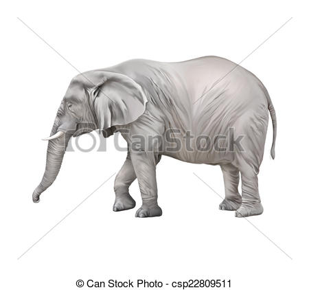 Clipart of African elephant, Loxodonta africana, on a white.