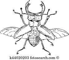 Lucanidae Clip Art Vector Graphics. 24 lucanidae EPS clipart.