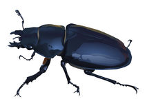 Stag Beetle Illustration Royalty Free Stock Image.