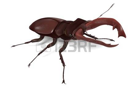 Lucanus Cervus Stock Illustrations, Cliparts And Royalty Free.