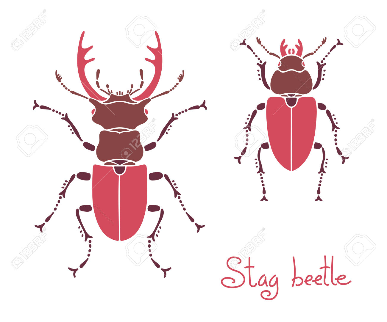Male And Female Stag Beetle, Lucanus Cervus, Stag.
