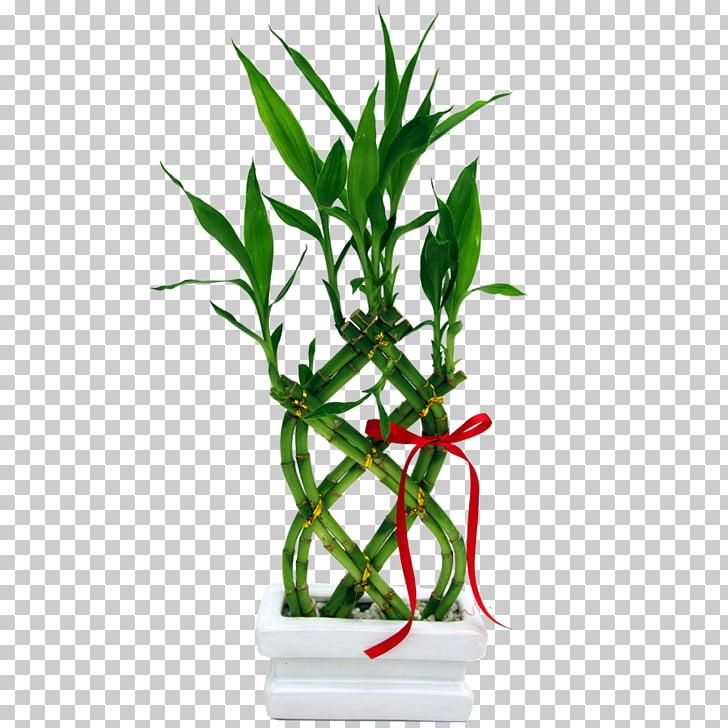 Lucky bamboo Garden Vase Plant, bamboo PNG clipart.