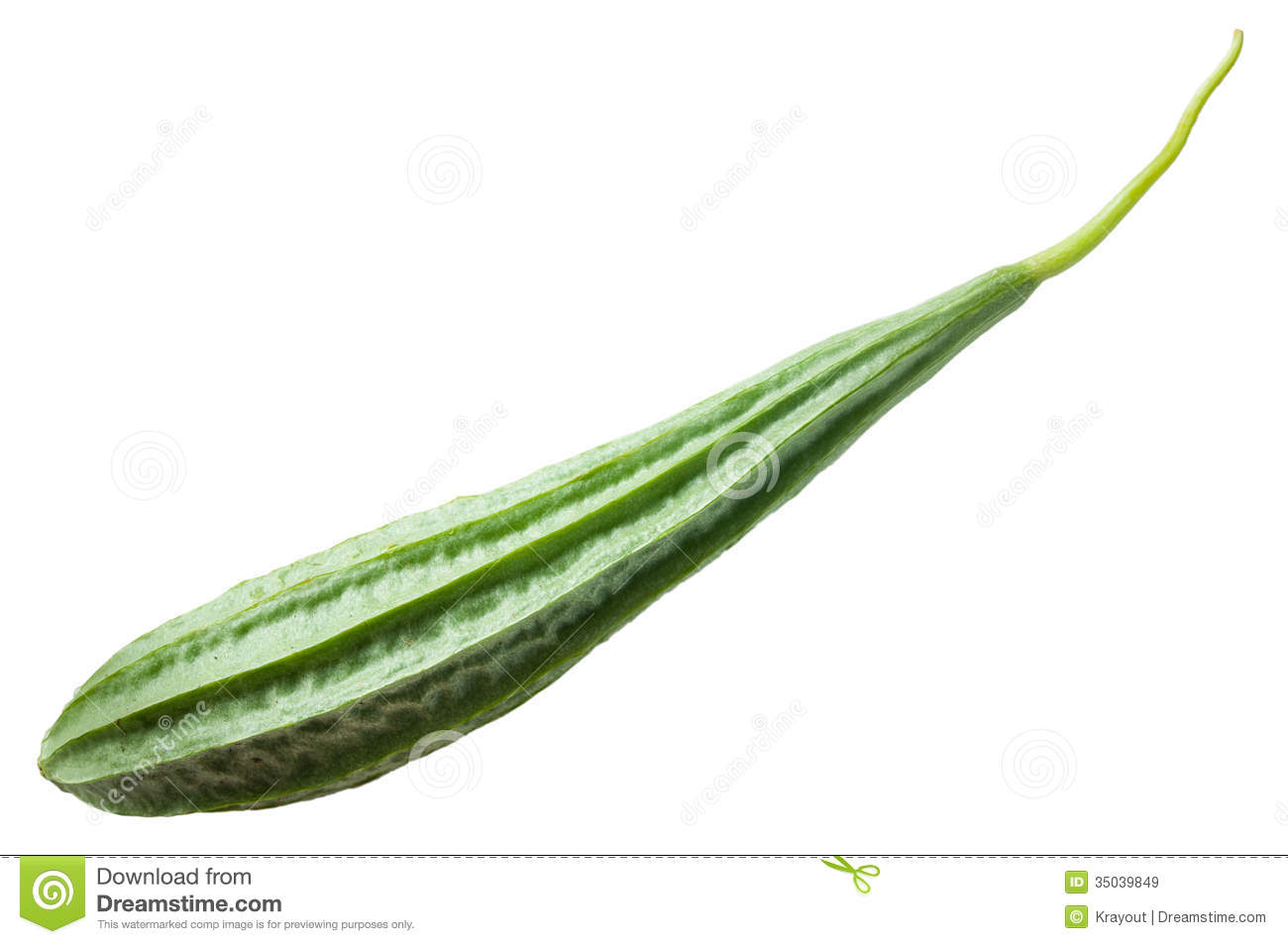 Sponge Gourd Vegetable Sponge( Luffa Cylindrica Roem.) Stock Photo.