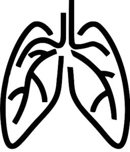 Lungs Clipart & Lungs Clip Art Images.