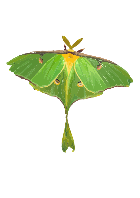 Free Clipart: Luna Moth / Actias luna.