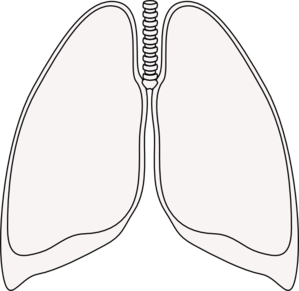 Free Lung Clipart Black And White, Download Free Clip Art.