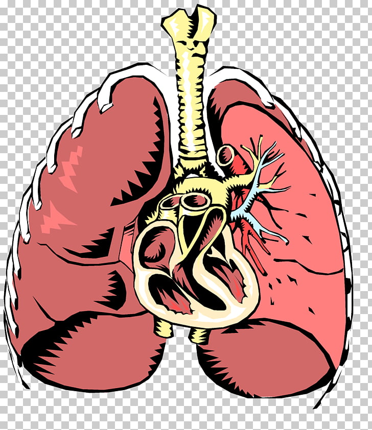 Respiratory disease Respiratory system Respiratory tract.