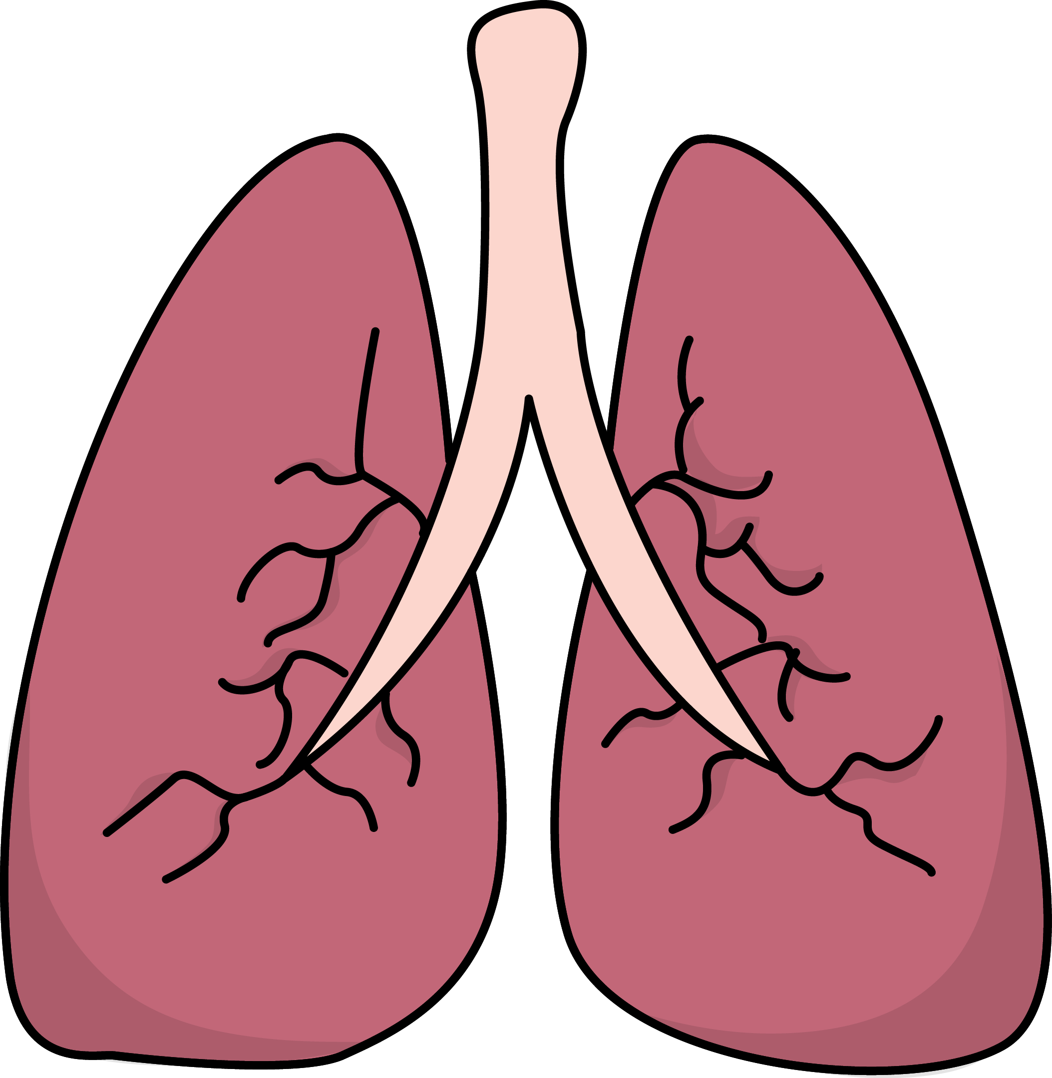 Lungs Images Human Body High Resolution Human Lung Clipart.