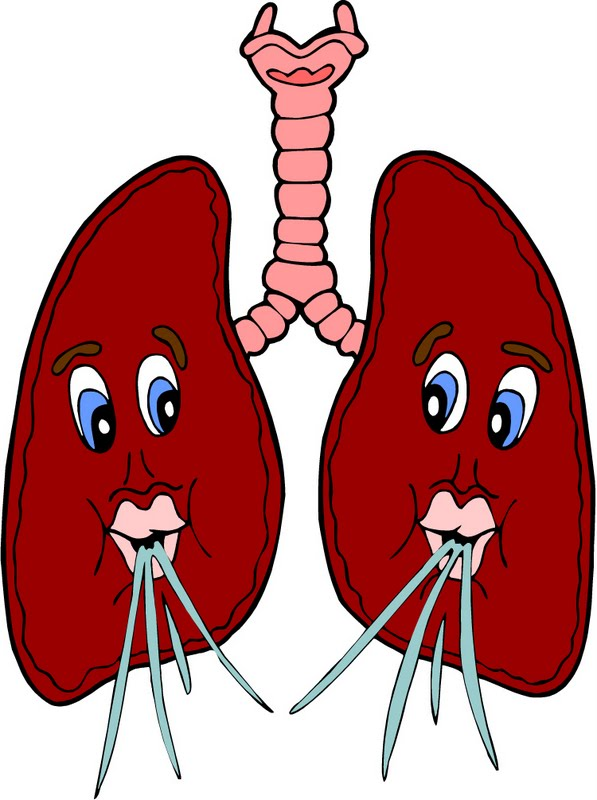Free Lungs Cliparts, Download Free Clip Art, Free Clip Art.