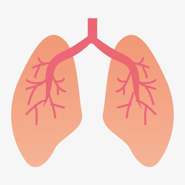 Animated Lung Png & Free Animated Lung.png Transparent.