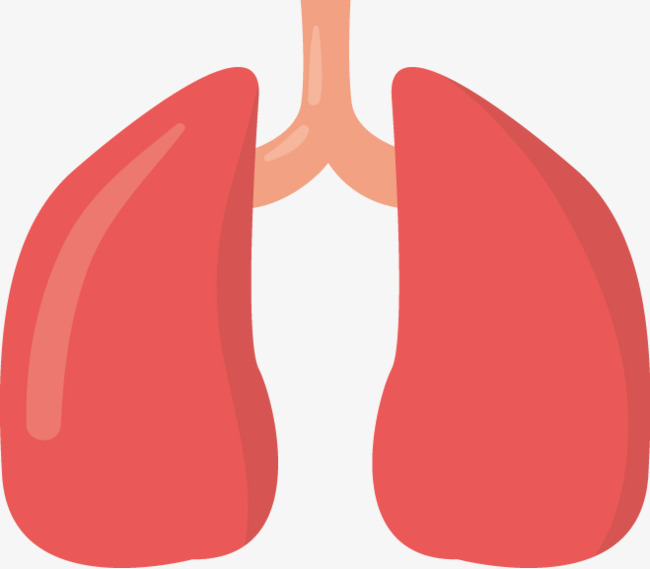 Download Free png Lung Png Vector Material, Organ, Vector.