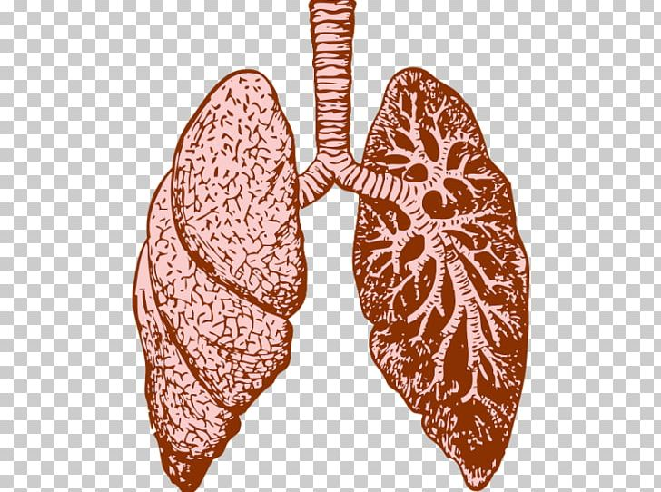 Lung Cystic Fibrosis Chronic Obstructive Pulmonary Disease.