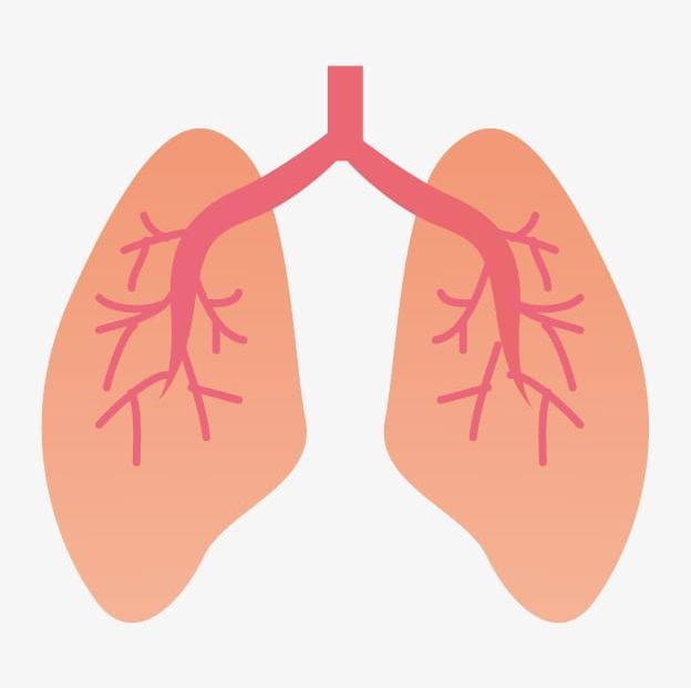 Lung PNG, Clipart, Animation, Cartoon, Lung, Lung Clipart.