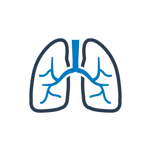 Best Lungs Illustrations, Royalty.