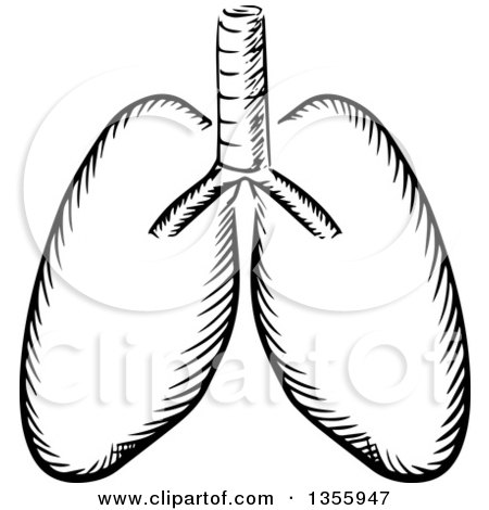 Similiar Black And White Human Lungs Keywords.