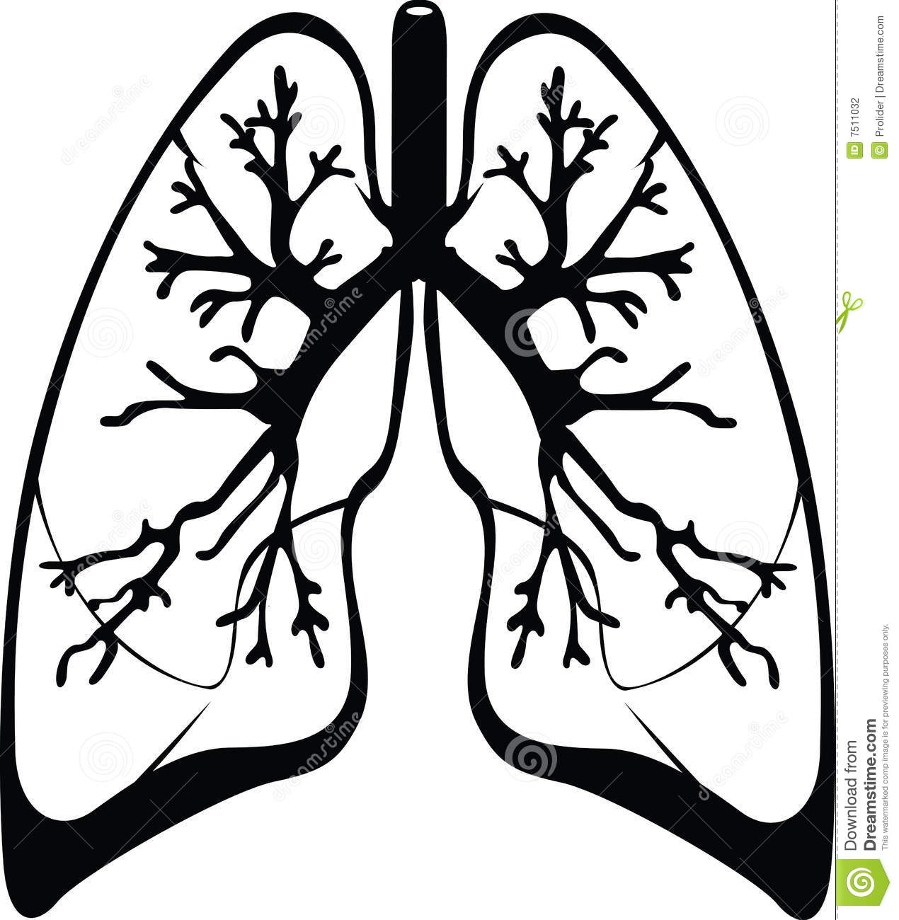 Lung Clipart Black And White.