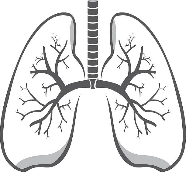 Best Human Lung Drawing Illustrations, Royalty.