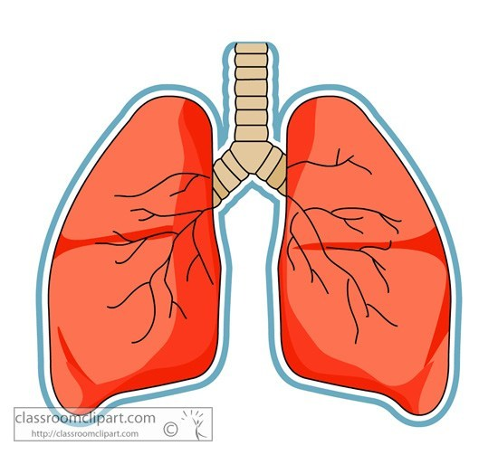 20+ Heart And Lungs Labeled Clip Art Ideas and Designs.