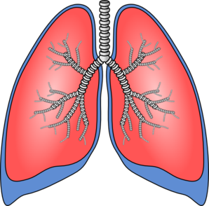 Lungs Cartoon Clipart.