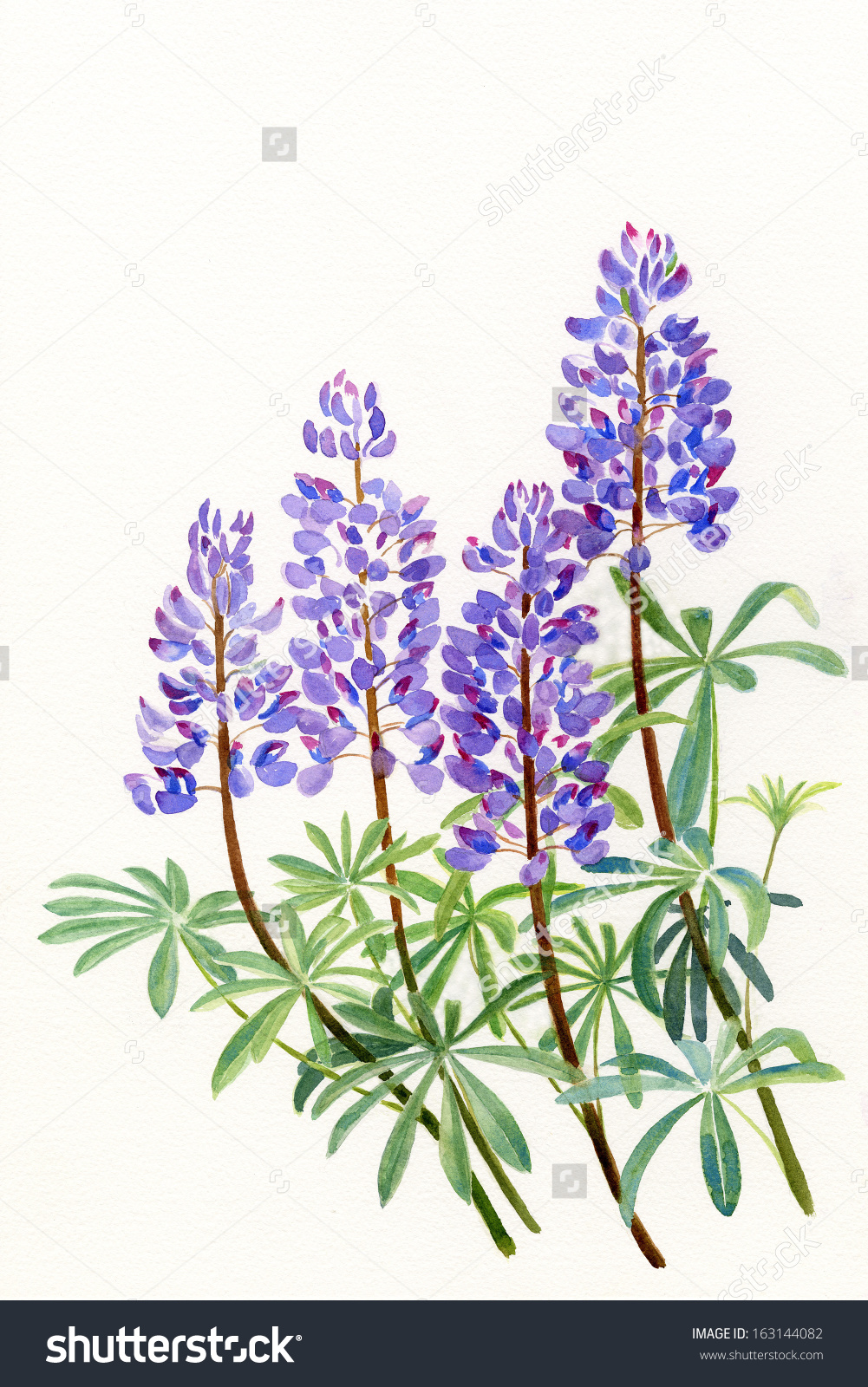 Lupine clipart.