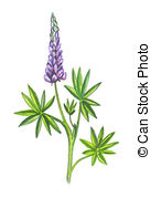 lupine clipart clipground