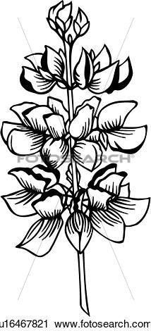 Clipart of , flower, lupine, varieties, u16467821.