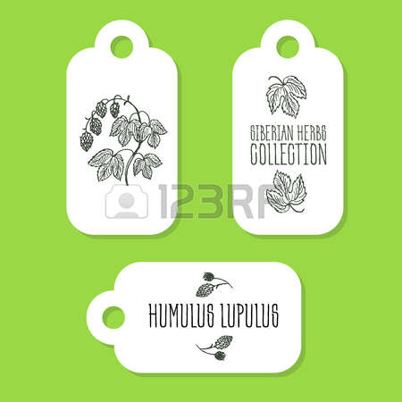 94 Lupulus Stock Illustrations, Cliparts And Royalty Free Lupulus.